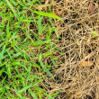 Fresh and dry grass — Stock Photo