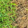Fresh and dry grass — Stockfoto