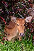женский антилопы на земле в парке — Стоковое фото