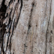 Stock Photo: Brown decay wood