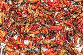 Dry red chili — Stock fotografie