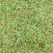 Seamless wet grass field surface — Stock Photo