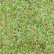 Seamless wet grass field surface — Stock fotografie