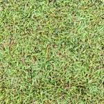 superficie de campo de hierba mojada transparente — Foto de Stock