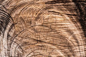 Cut brown wood surface — Stock Photo