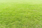 Seamless grass field — Stock Photo