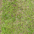 Seamless grass field surface — 图库照片