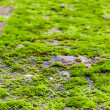 Green moss on rock — Stock Photo #31584387