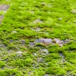 Stock Photo: Green moss on rock