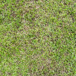 Seamless grass field surface — Stock Photo