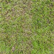 Seamless grass field surface — Foto de stock #31585539