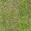 ストック写真: Seamless grass field surface