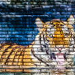 Tiger in water painting on brick wall — Stock Photo