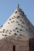 Historic building and pigeons — Stock Photo