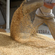 Animal feed — Stock Photo #14913303