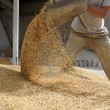 Animal feed — Stock Photo