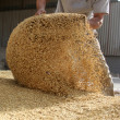 Stock Photo: Animal feed