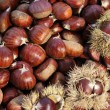 Chestnut — Stock Photo #32655295
