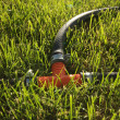 Drip irrigation — Stock Photo #32683795