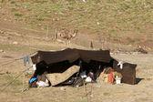 Nomad's tent — ストック写真