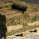 Lawn laying — Stock Photo