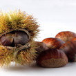 Chestnut — Stock Photo #38986007