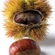 Chestnut — Stock Photo #38986999