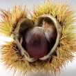 Chestnut — Stock Photo #38988507