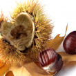 Chestnut — Stock Photo #38989109