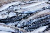 Fresh fish in the market — Stock Photo