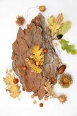 Acorns oak leaves — Foto de Stock
