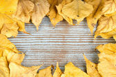 A frame made of autumn yellow leaves — Стоковое фото
