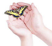 Opened child's hands holding a colorful butterfly — Stock Photo