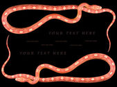 Amel Motley Corn Snakes — Stock Photo