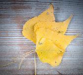 Na podzim žluté listy — Stock fotografie