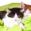Stock Photo: Two adorable kittens sleeping in blanket
