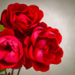 Garden red roses — Stock Photo #14247629