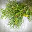 Stock Photo: Christmas tree branches with pine cones