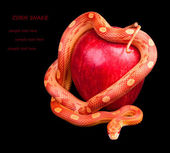 Snake wrapped around an apple — Stock Photo