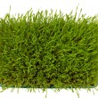 Fresh green wheatgrass — Stock Photo #16364089