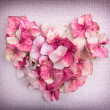 Heart made from pink hydrangea flower petals — Stockfoto