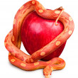 Snake wrapped around an apple — Stock Photo #18433781