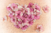 Romantic vintage hydrangea flower in the shape of a pink heart — Stock Photo