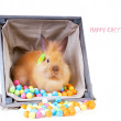 Bunny sitting inside vintage wooden box — Stock Photo #19857477