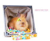Bunny sitting inside a vintage wooden box — Stock Photo