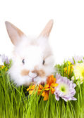 White bunny in green grass with flowers and easter decorations — Stock Photo