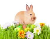 Brown baby rabbit in green grass with flowers and easter eggs — Stock Photo