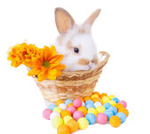 Cute bunny in a basket with flowers and colorful decorations — Stock Photo