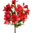 Bouquet of alstroemeria flowers isolated on white background — Stok fotoğraf