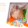 Bunny sitting inside a vintage wooden box with colorful decorati — Stock Photo
